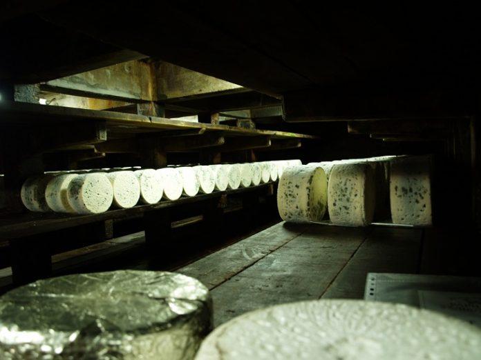 Visite caves de Roquefort Papillon