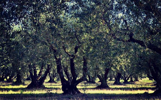 visite moulin huile olive fortune arizzi